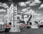 Tower Bridge Buses
