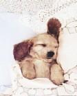 Sleepy Pup