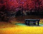Bench Surounded With Grass & Wood