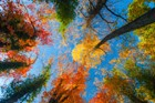 Autumn Forest Trees Colorful Sky Fall