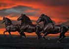 Bob Langrish Horses