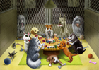 Shelter Dogs Playing Poker
