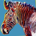 Zebra IIII