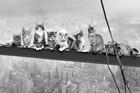 Cats On Gider